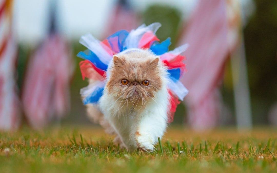 A Fourth of July Party for Your Cat!